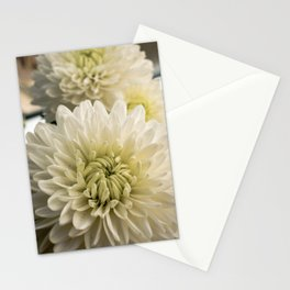 White Chrysanthemums in bloom Stationery Cards