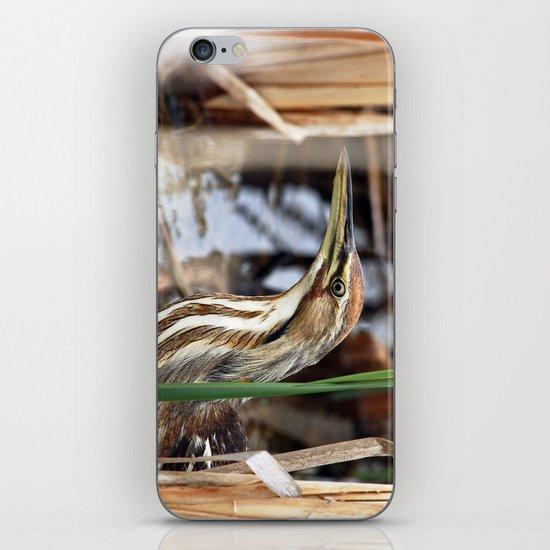 American Bittern - Take Two iPhone & iPod Skin