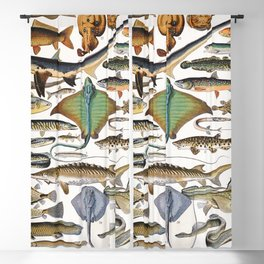 Adolphe Millot - Poissons A - French vintage nautical poster Blackout Curtain