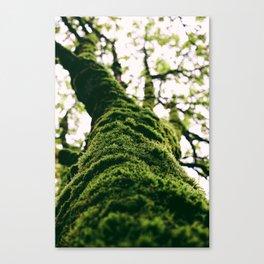 Nature's Hand Canvas Print