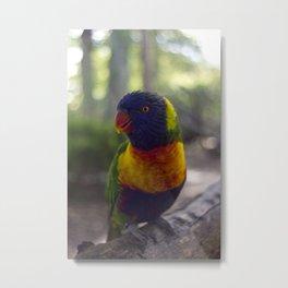 Rainbow Lorikeet. Metal Print