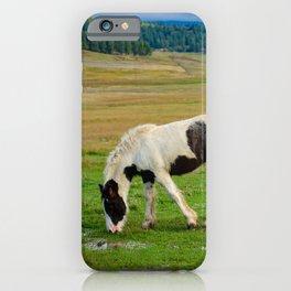 Gypsy Vanner Filly 5506 - Colorado iPhone Case