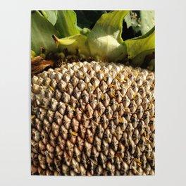 Sunflower Seeds Poster