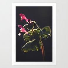 Botanical Life Art Print