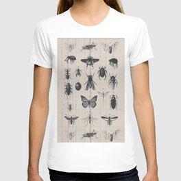 Vintage Insect Study on antique 1800's Ledger paper print T-shirt
