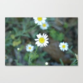 Remember Summer? Canvas Print
