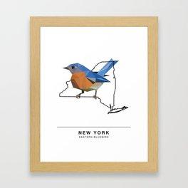 New York – Eastern Bluebird Framed Art Print
