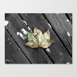 Single leaf in a whole world of trees Canvas Print
