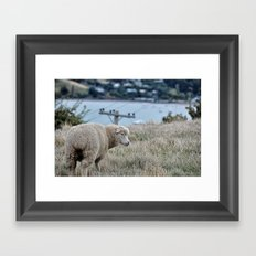 Sheep 1 Framed Art Print