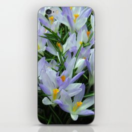 Lavender Crocus iPhone Skin