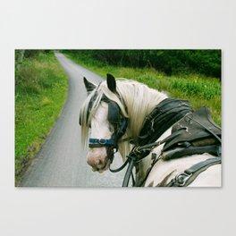 Carriage ride Ireland  Canvas Print