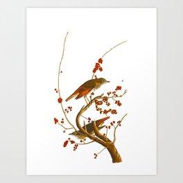 Hermit Thrush Bird Art Print