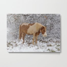 Pinto in the snow Metal Print