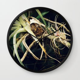 Epiphyte Wall Clock