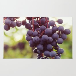 Glowing Red Wine Grapes Rug
