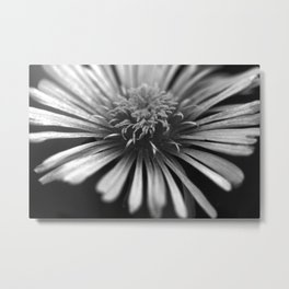 Ice Plant in Black and White Metal Print