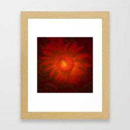 Fiery Sunflower.... Framed Art Print