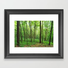 Forest 3 Framed Art Print