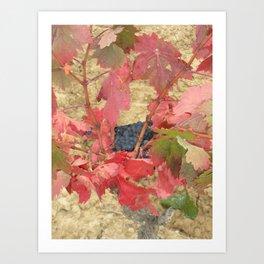 Rioja Grapes Art Print