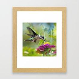 Sweet Hummingbird Framed Art Print