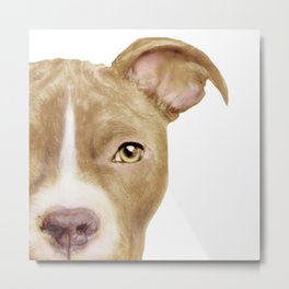 Pitbull light brown Dog illustration original painting print Metal Print