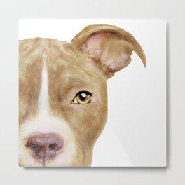 Pitbull light brown Dog illustration original painting print Metal Print