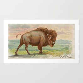 Vintage Illustration of a Buffalo (1890) Art Print