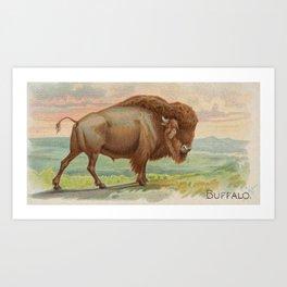 Vintage Illustration of a Buffalo (1890) Art Print