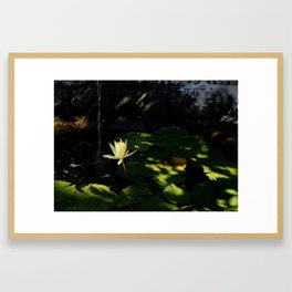 Lotus Pond Framed Art Print