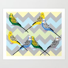 Parakeets Looking at You - Chevron Art Print