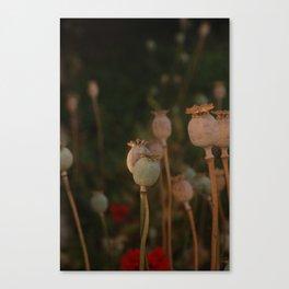 Pastel Wix Canvas Print