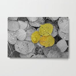 Colorized Aspen Leaves with Water Drops Metal Print