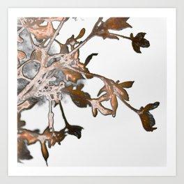 Frosty Hydrangea 6 Art Print