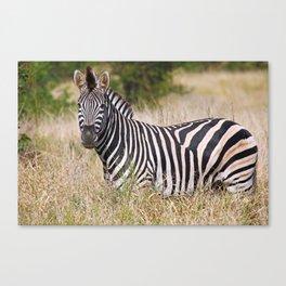 Zebra in the grass - Africa wildlife Canvas Print