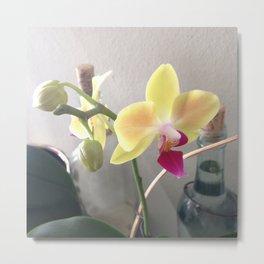 Yellow Phalaenopis Orchid 2  Metal Print