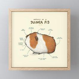 Anatomy of a Guinea Pig Framed Mini Art Print