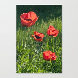 Dream of Red Poppies Canvas Print
