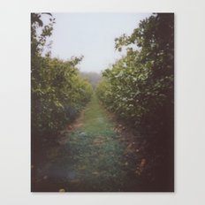 Orchard Row Canvas Print