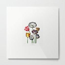 Tulips very old illustration Metal Print