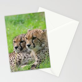 Cheetah_20171203_by_JAMFoto Stationery Cards
