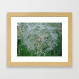 #406 WEED SEED house  bitterroot mt macro  Framed Art Print