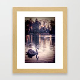 Swan Lake 2 Framed Art Print