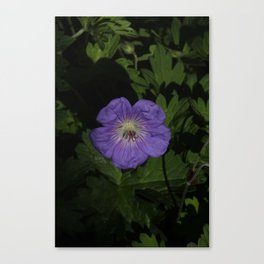 Lost purple Canvas Print