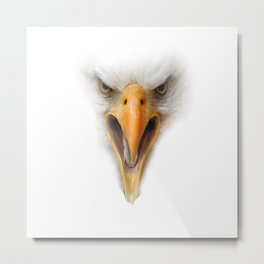 eagle face on white  Metal Print