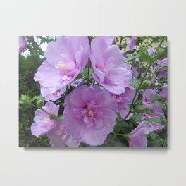 The three sisters - pink flowers wall art Metal Print