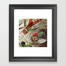 Flying Fish Framed Art Print