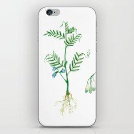 Lentil iPhone Skin