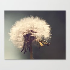 Lonely Dandelion Canvas Print