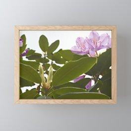 Pink Azalea Flowers with Spring Green Leaves Framed Mini Art Print