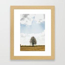 The solitary Burmese tree Framed Art Print
